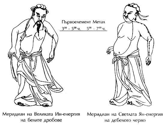 Меридияни на белите дробове и на дебелото черво