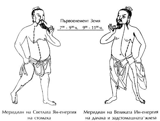 Меридияни на стомаха, далака и задстомашната жлеза