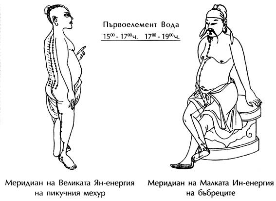 Меридияни на пикочния мехур и на бъбреците