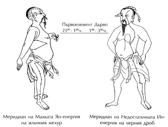 Меридияни на жлъчката и черния дроб