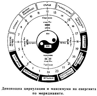 Денонощна циркулация по меридияните