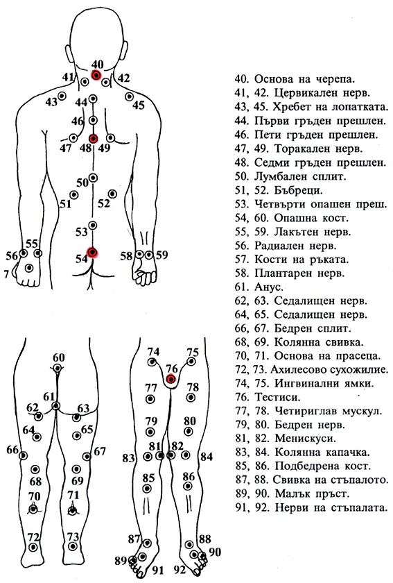 Някои основни части на тялото - схема