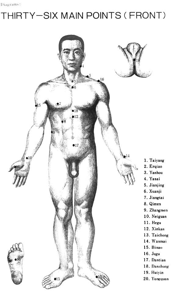 36 основни точки от предната страна на тялото
