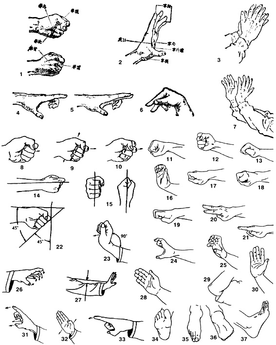 Позиции на ръцете